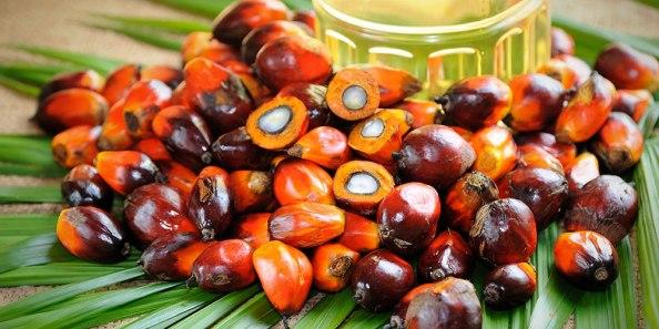 Belajar Tentang Crude Palm Oil(CPO)